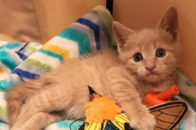 虐待によって下半身が全く動かなくなってしまった子猫。「ある治療法」によって奇跡的に回復した瞬間とは!