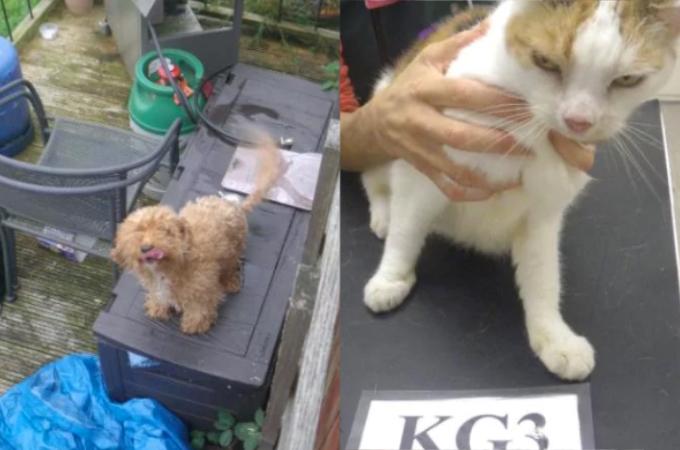 飼っていたペット3匹を放置し2週間の旅行へ出かけた夫婦。餓死させた上に責任を押し付け非難殺到。