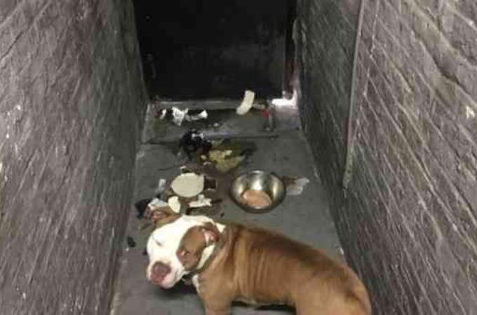 地下室に飼っていた犬を置き去りにし、引っ越していった飼い主。ひとりの女性によって救われる。