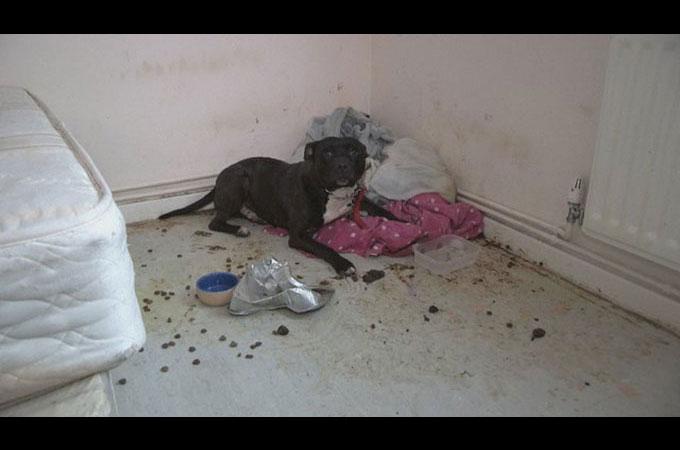 飼育放棄され自分の糞尿にまみれた状態で助けを求め泣き叫ぶ犬