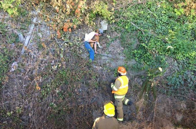 走行する車の窓から飛び出し崖下へ転落した犬を救ったのはホームレスの男性