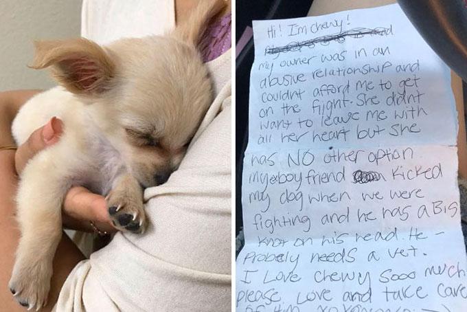 空港に捨てられた傷ついたチワワ 飼い主からの悲しい書き置きに思わず涙