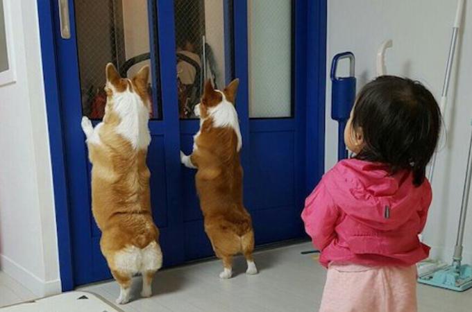 外を覗き込む2匹の犬が気になった子ども。次の瞬間に子どもがとった行動が可愛すぎると話題に!