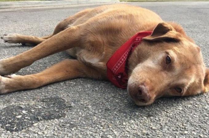 飼い主が目の前で交通事故に遭い、その場に残された愛犬。飼い主が戻って来ることを信じ待つ姿に胸が苦しくなる。