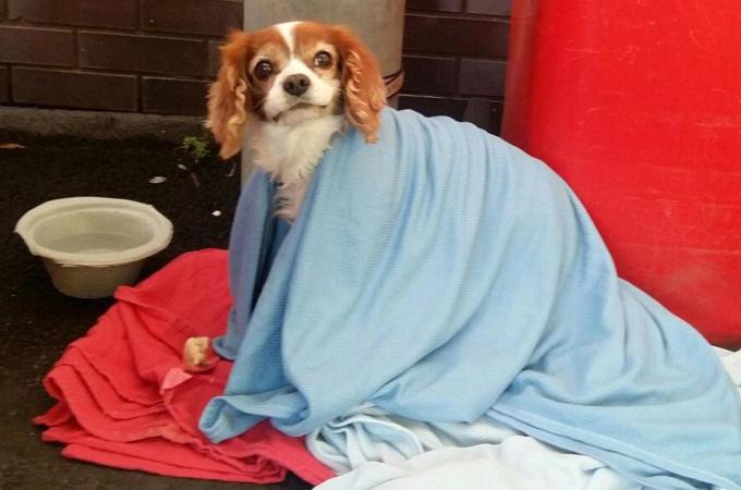 目の前で飼い主が倒れ緊急搬送された犬。その後、多くの人の親切のリレーによって無事に飼い主と再会。