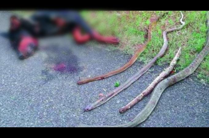 4匹のヘビから家族を守るため、自らの命を懸け勇敢に立ち向かった犬