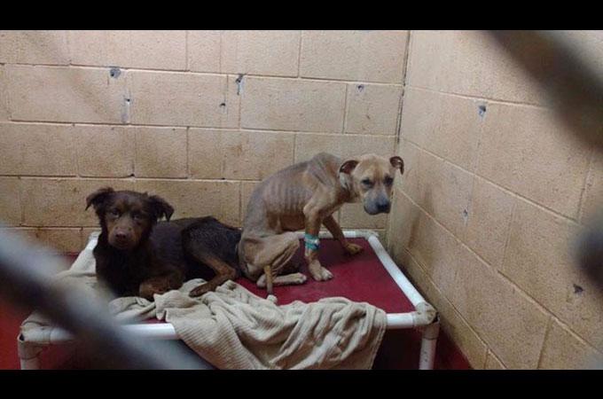 シェルターに保護された後も空腹で衰弱した2匹の犬が素敵な笑顔を見せるまで