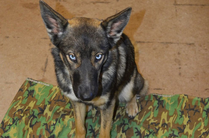 漁船から転落した犬。「もう生きてはいないだろう」と誰もが諦めた5週間後、無事に発見され保護される。