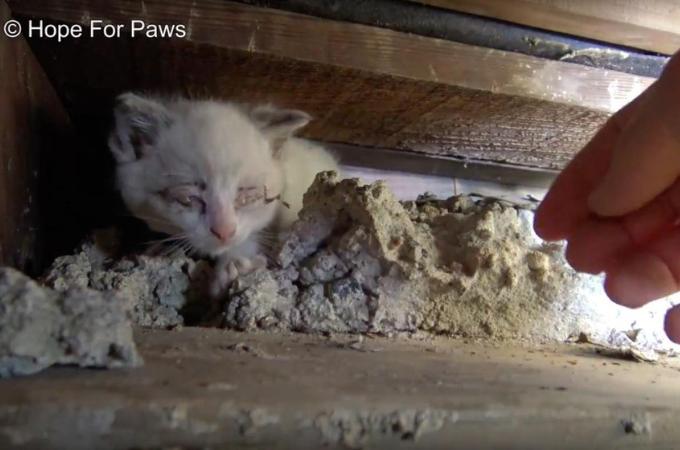 アパートの階段下という不衛生な場所で生活していた猫の家族。無事に、動物愛護団体によって保護される。