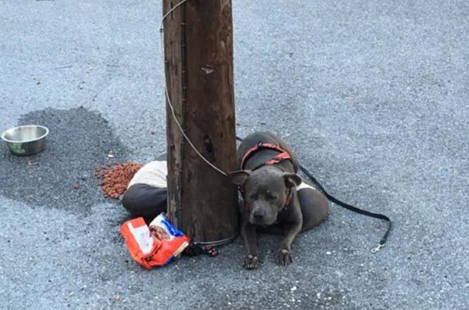 猫を保護する施設の電柱にくくりつけられ捨てられた犬。ひとりの女性の懸命なトレーニングによって幸せを手にする。