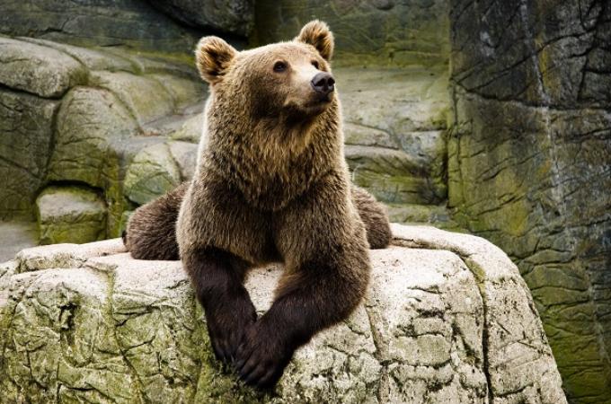 ワナにかかった子グマを射殺。「親と見られるクマを落ち着かせるためには仕方なかった」と説明。