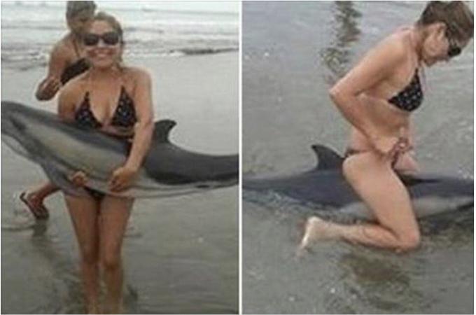 海岸に迷い込んだイルカの赤ちゃんが海水浴客らによって玩具にされその後、死亡した事件。その時の光景に胸が苦しくなる。