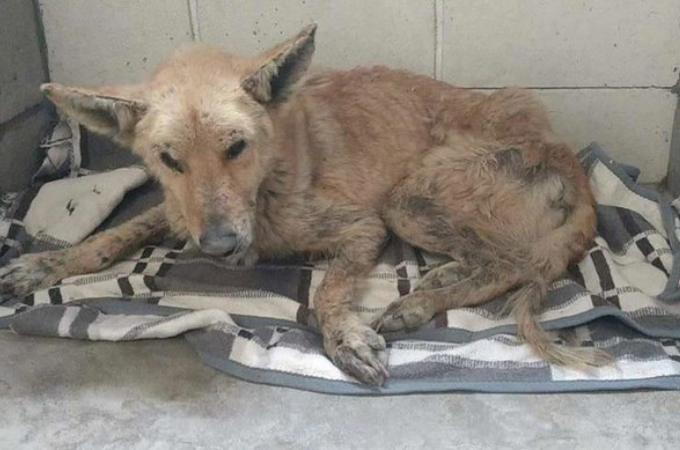 ボロボロの状態で路上を彷徨っていた野良犬。マイクロチップの情報から飼い犬だと判明。そして、その後。