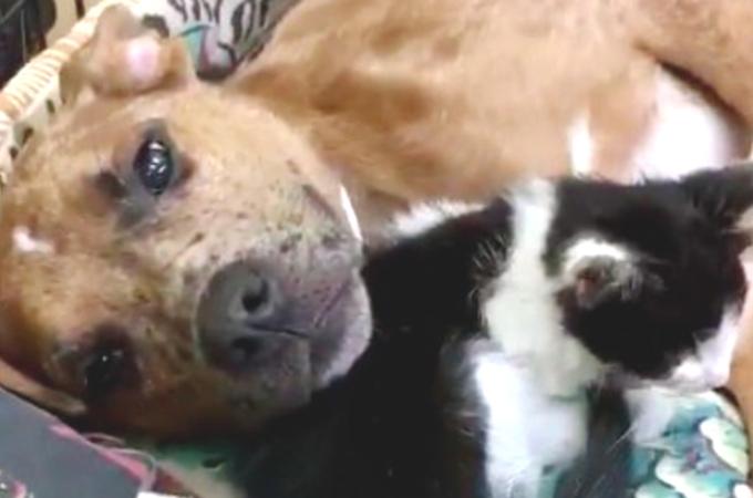 衰弱した子猫とケガを負っている犬。弱り切った2匹が出会い、お互いを支え合う。