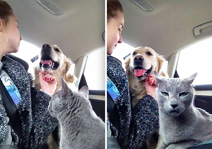 仲良くして欲しいと望む飼い主さんの期待を可愛く裏切る犬と猫のおもしろ画像