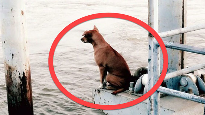 川でボートから落ち飼い主が迎えに来ることを信じて4ヶ月待ち続けた犬