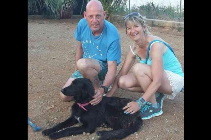 旅行先でボロボロの状態の野良犬に出会った夫妻。放って置くことができず保護し、その後、家族として幸せに暮らす。