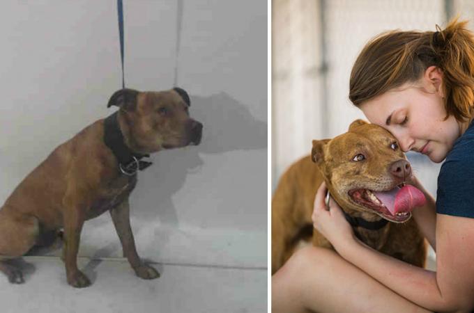 犬や猫たちの魅力を引き出した新しい家族。新しい家族と出会う前、出会った後のBefore・After写真15枚。