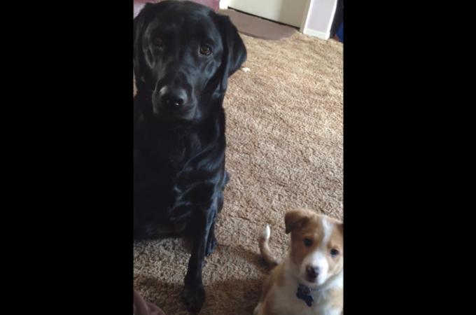 2匹の犬に「あなたの親友はだれ?」と質問した飼い主さん。すると、親友であると言うことを誰もが心を掴まれる方法で表現する!