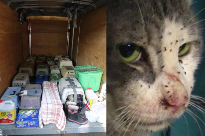 増えすぎた猫を放置し家を出て行った飼い主。8ヶ月後に保護された猫たちの悲惨な様子とその後。