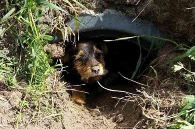 足を怪我した犬を発見した夫婦。放っておくことができず保護。その後の幸せそうな様子がこちら!