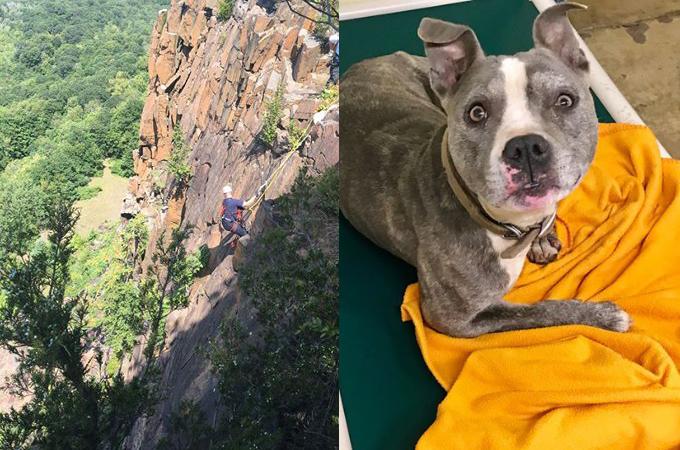 崖の途中で身動きが取れなくなっている1匹の犬を救うため、救助隊が命をかけて救出に向かう!