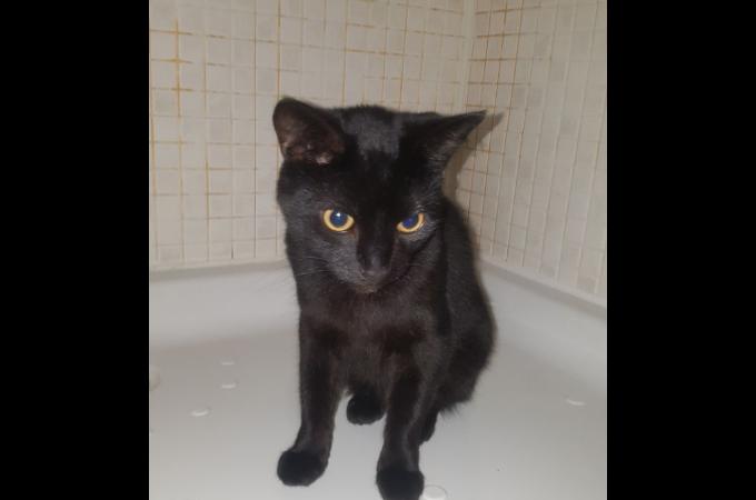 「ノミがいるからもう要らない」と獣医に安楽死を申し出、数日後には別の猫を飼う飼い主。獣医がとった行動とは。