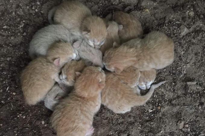 寒い中、身を寄せ合って震える子猫たちを保護。懸命に子猫たちの世話をし続けた結果、見違える姿に!