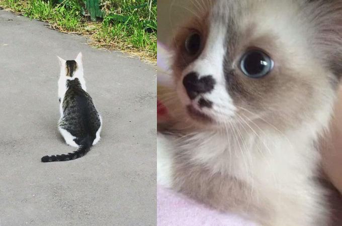 よく見るとすごい!!とてもユニークな毛並みをした猫たちの画像11枚!