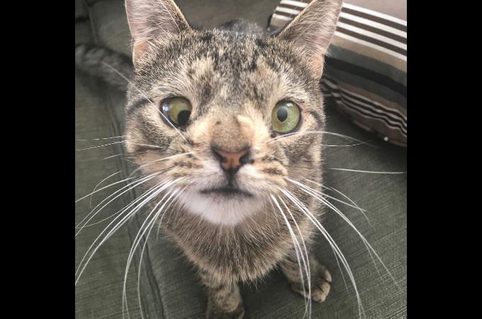 「見た目がヘン」という理由で殺処分される予定だった健康的な猫。間一髪のところで非営利団体によって保護される。