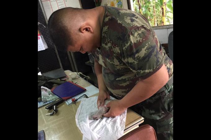 タイで発生した洪水被害に遭い瀕死の状態の子犬。小さな命でも諦めずに蘇生措置を行った軍兵に称賛の声が寄せられる!