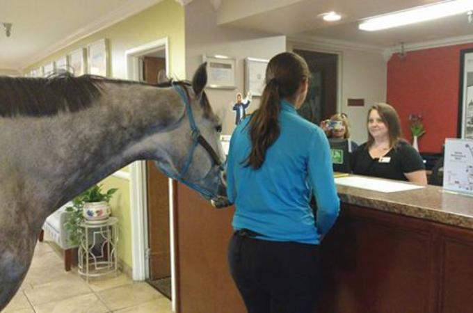 ホテルにいた客が犬と一緒にチェックインしているのを目撃したカナダの調教師。冗談半分で馬と泊まりたいのですが」と告げた結果!