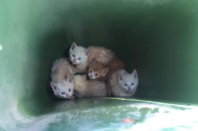ゴミ箱の中に捨てられ、2日間も寒さと飢えに耐えた5匹の子猫たち。保護されると見違えるほど美しい姿に変身する。