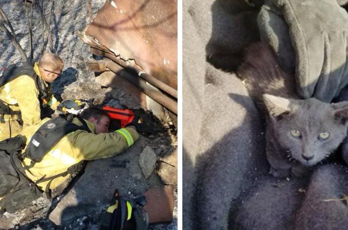 大規模な山火事を生き残り、瓦礫に逃げ込んだところを消防隊員によって救出された子猫。