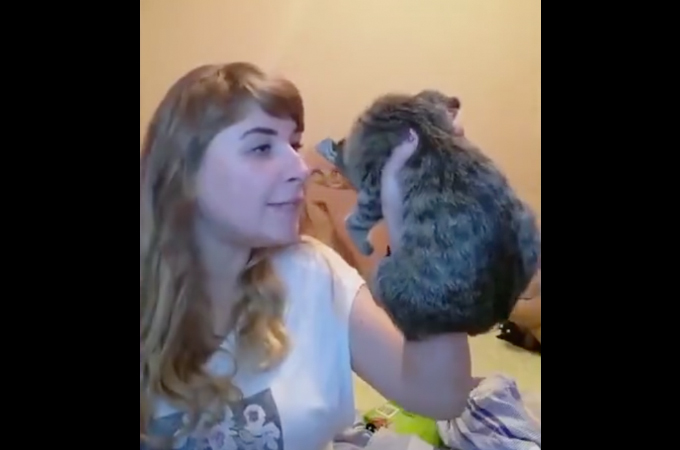 ライブ配信で子猫を殴り、壁に投げつけた女。その後、女が明かした子猫を虐待した理由に批難殺到。