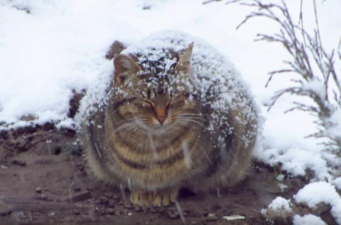 雪の降る極寒の中、必死に生きようとする妊娠中の猫。優しい男性に保護され、暖かい場所を手に入れる。