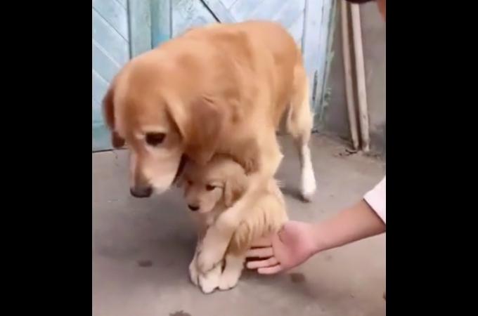 飼い主だろうと愛する我が子には触らせたくない!飼い主の手から必死に守る母犬の様子がこちら!
