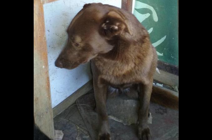 路上で保護された迷子犬。悲しみからか完全に心を閉ざすも、2年後に1枚の写真が奇跡を起こす。