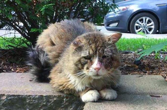 飢えと寒さでボロボロの状態になっていた野良猫。多くの人の手で、人を信じるようになり本来の輝きを取り戻す。
