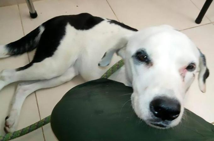 空港で飼い主に捨てられた犬。飼い主を探し続けるも、食べ物も喉を通らなかくなり、息絶えてしまう。
