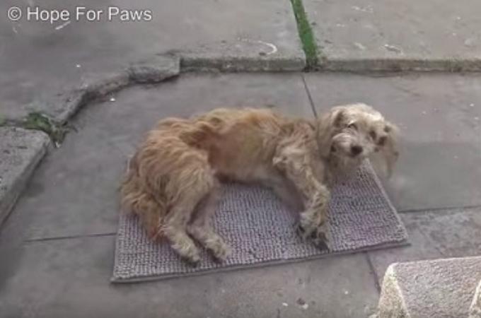 民家の裏庭に倒れ込み動けなくなった野良犬。そのことが幸いし、一命を取り留め永遠の家族を見つける。