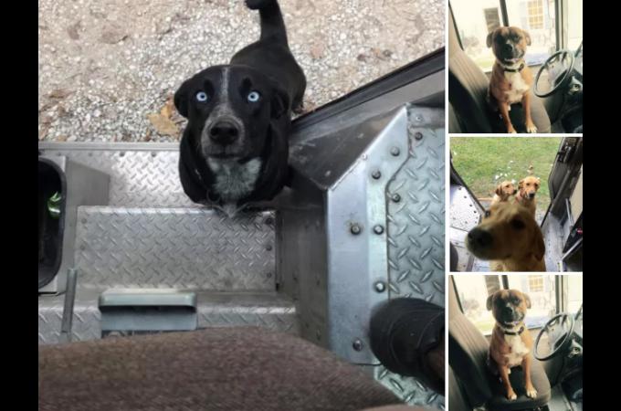 宅配ドライバーとして働く男性。物を運ぶよりも犬とたわむれる様子をFacebookに投稿する理由とは。