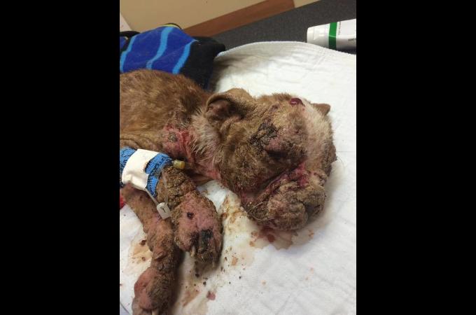 寒い冬に外で放置され、痛々しい姿をした犬。そして、それを罰するためにできた新法律とは。