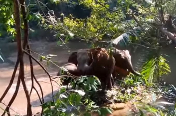 象の子供が穴に落ち抜けれなくなったところを救助。すると、象の家族が人間に感謝し、森へと帰る。