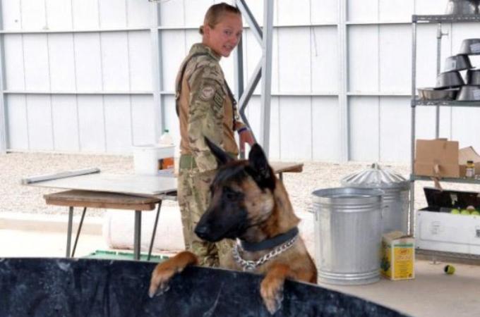 戦地で大勢を救ってきた軍用犬。任務が終わると安楽死させられることに。兵士らが犬を救うために請願書を提出する。