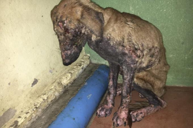 顔面に穴があき、誰もが無理だと諦めていた犬が、高度な医療によって奇跡的に回復。見違えるほどの姿に!