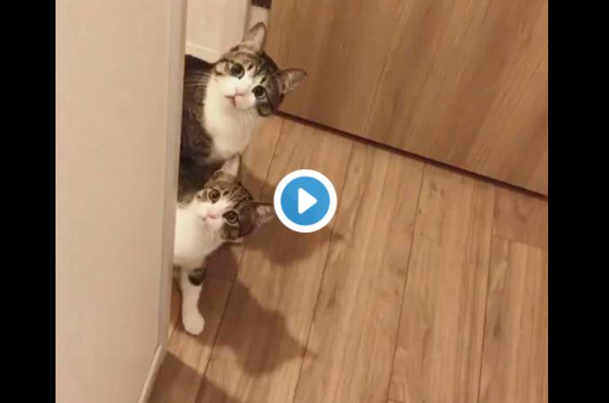 2匹の猫のあまりにも可愛すぎる行動に発狂する人が続出!!その様子がこちら!!