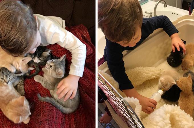 2歳の男の子が、行き場のない子猫たちのお世話をし、これまでに多くの猫たちを立派に育て上げる。