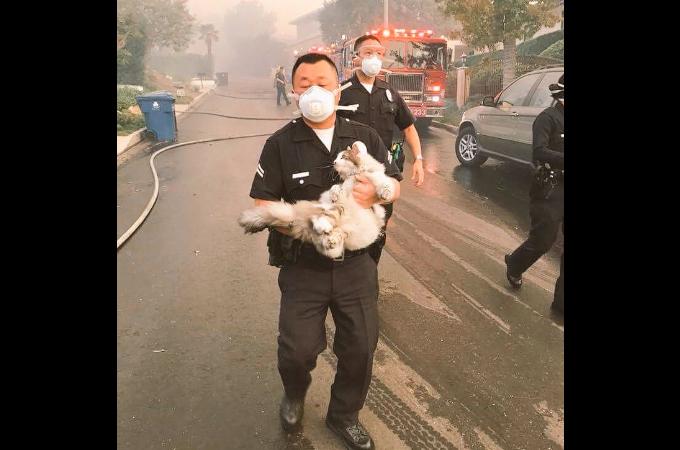 「誰かにとっては単なる猫。しかし、他の誰かにとっては、愛おしい相手」として救助にあたる消防士たち。