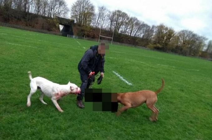 普段から遊んでいた広場でノーリードの大型犬2匹に噛み殺されたビーグル犬。大型犬の飼い主の行動に憤り。